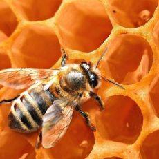 Как пчелы усвоили логику и геометрию