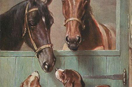 Лошади видят человеческую злость