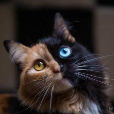 8 научно обоснованных причин завести кошку