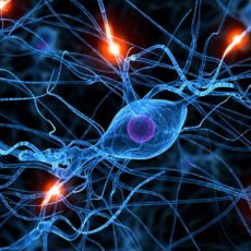 Старение мозга можно остановить