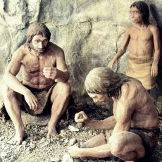 Речь возникла 20 миллионов лет назад