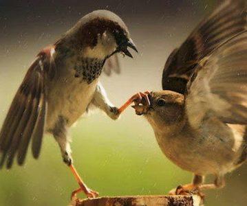 Общение животных подчинилось законам языка
