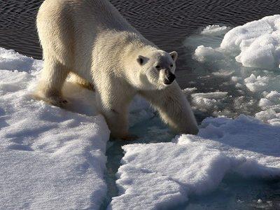 Ученые оценили угрозу климатических изменений для живого мира