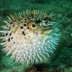 Биологи обнаружили у рыб феномен отчаяния