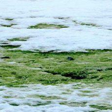 В Антарктиде стало больше необычного зеленого снега