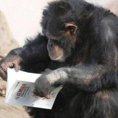 Как мозг приматов приспособился к чтению