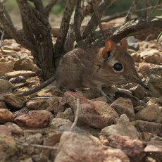 Найдены виды, пропавшие сто лет назад