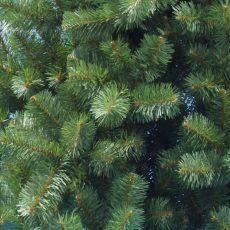 Секрет вечнозеленых хвойных растений