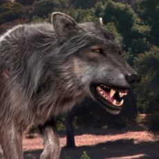 Ученые расшифровали ДНК древних волков