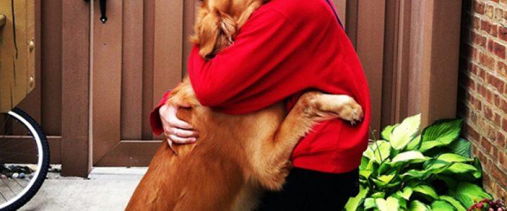 Собаки понимают взрослых лучше, чем детей