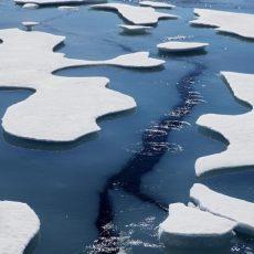 Новые живые существа обнаружены под шельфовым ледником Антарктиды