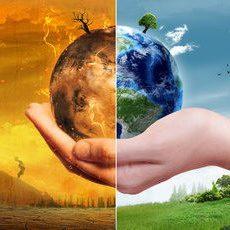 Как глобальное потепление повлияет на рост деревьев