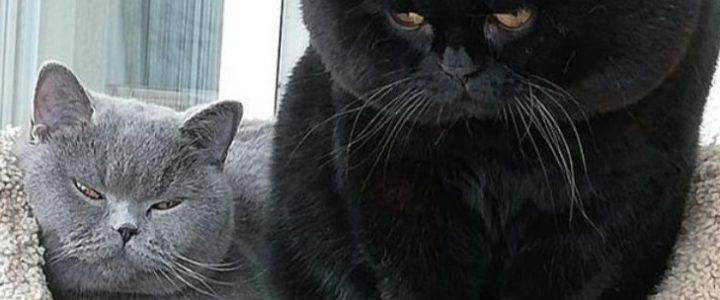 Как подружиться с котиком