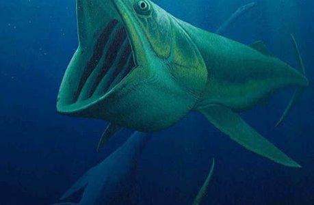 Древние рыбы заранее подготовились к выходу на сушу