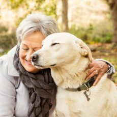 Собаки запоминают новые слова с четырёх раз